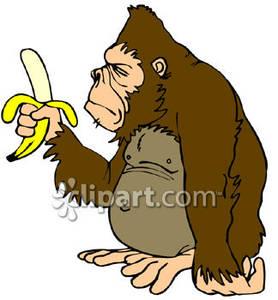Banana clipart gorilla With Royalty Banana A A