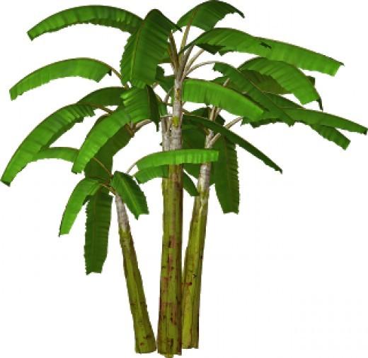 Wedding clipart cart Free Plants Clip Banana TREE
