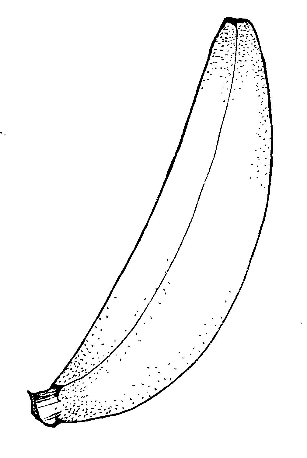 Banana clipart orange fruit And Fruit white black 4