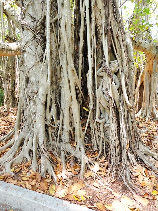 Banyan Tree clipart adyar 54 A of best statue