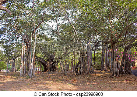 Banyan Tree clipart adyar The of The the Big