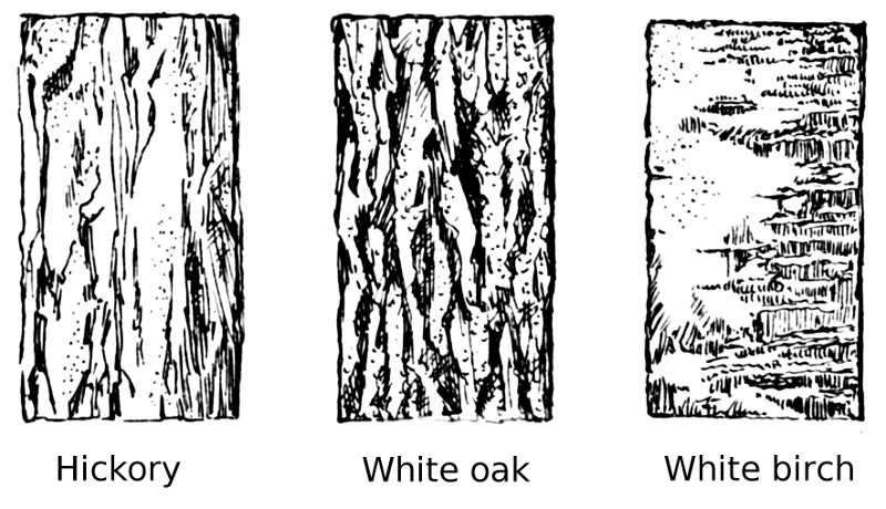 Bark clipart Tree Tree cliparts Bark Clipart