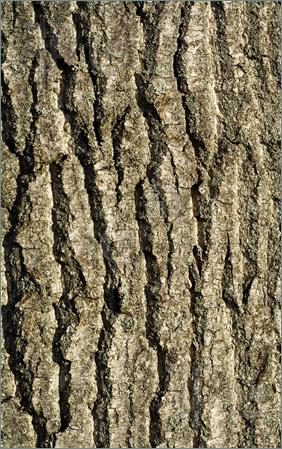Bark clipart Tree Clipart Bark Bark cliparts