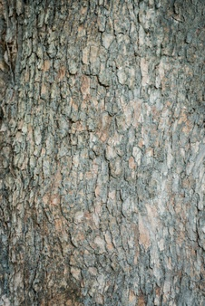 Bark clipart grey And Free Bark Download files