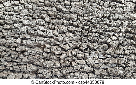 Bark clipart grey Csp44350078 Stock Picture tree Search
