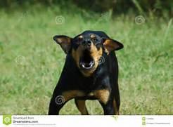 Bark clipart vicious dog Gallery an barking Dog dog