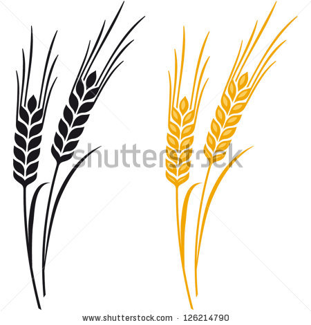 Drawn grain wheat crop Panda Images Clipart Clipart Barley