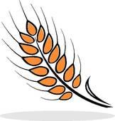 Barley clipart wheat seed Barley Images Clipart Clipart Panda