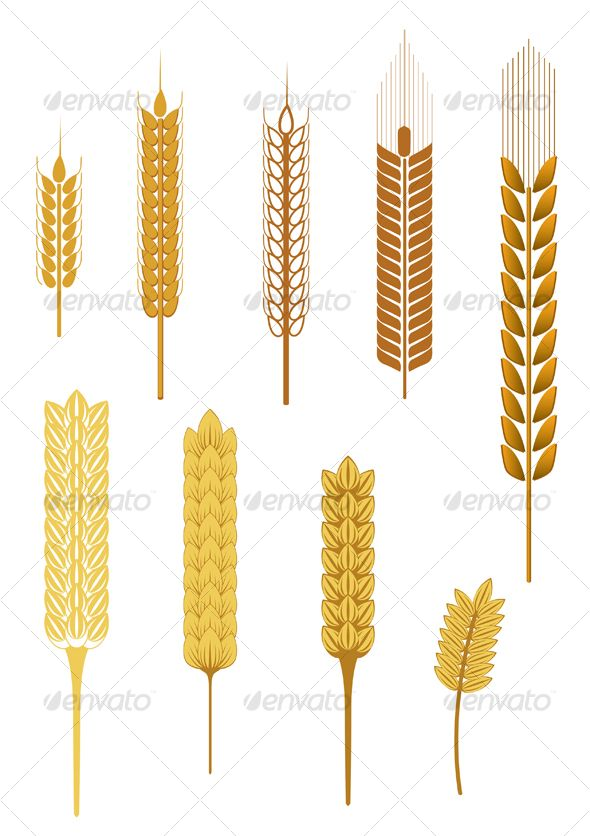 Barley clipart wheat leave Cooking ideas ears Barley barley