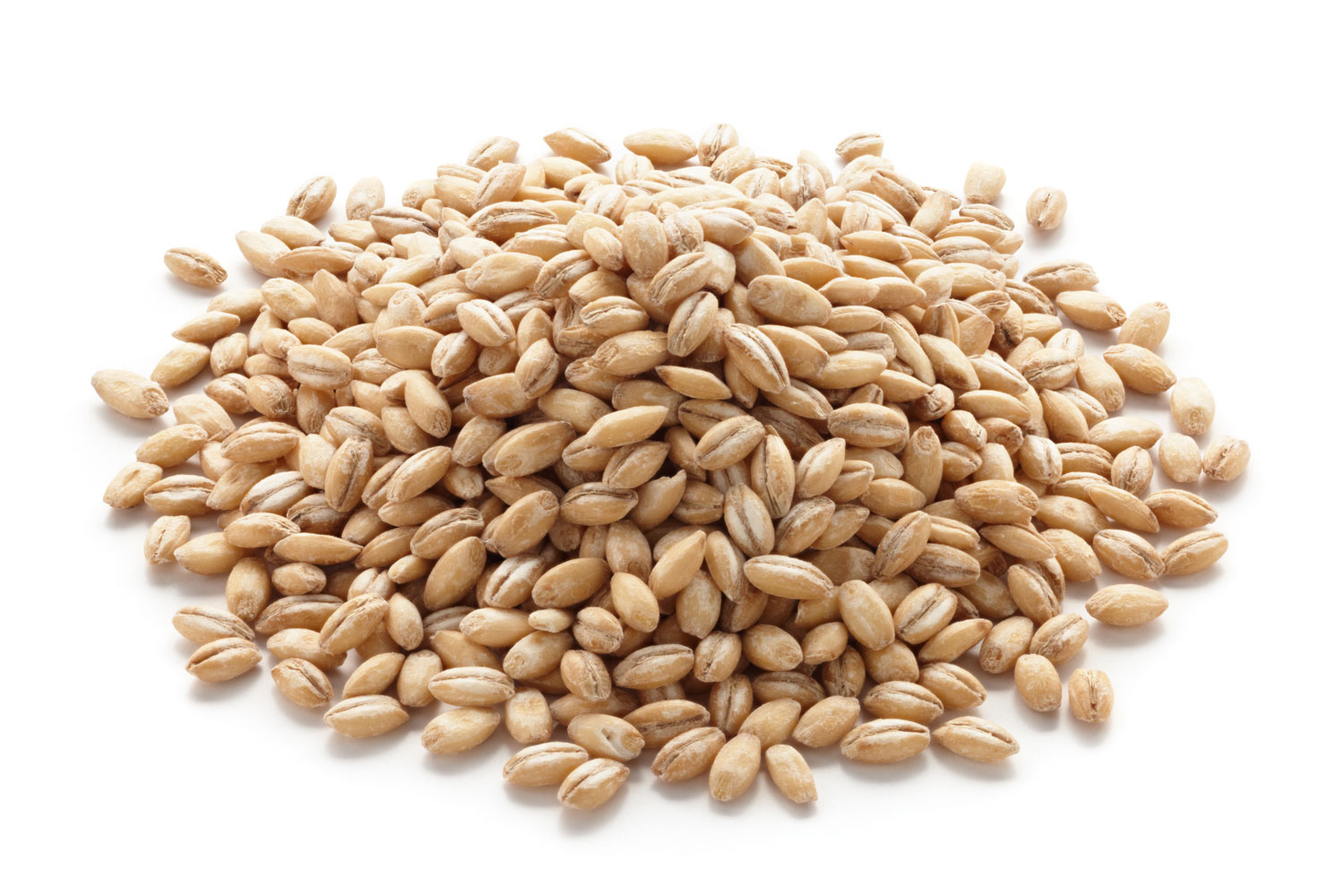 Barley clipart wheat seed The Grains Serious Eats Serious
