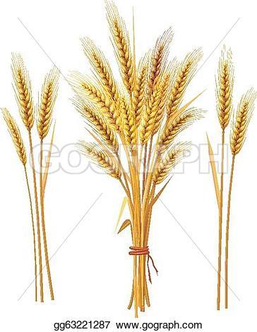 Barley clipart wheat straw Wheat Vector Spike gg63221287 Stock