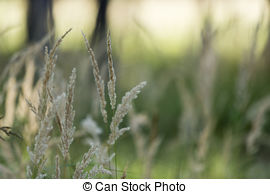 Barley clipart wheat straw Stock Dry straw harvest of
