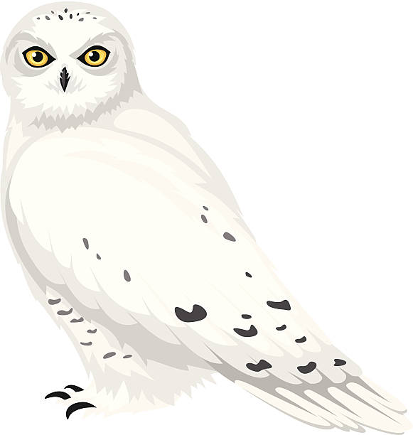 Barn clipart snowy Drawings Owl Download Snowy Snowy