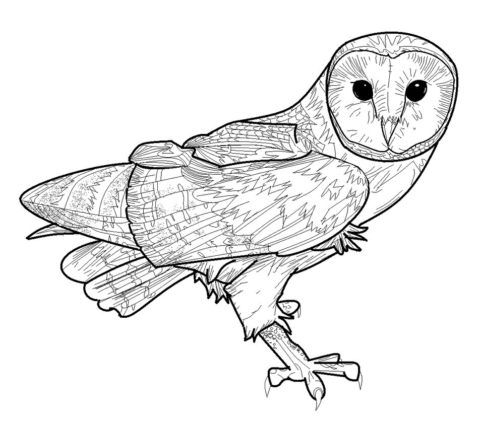 Barn Owl clipart Barn owl Drawing drawing Line