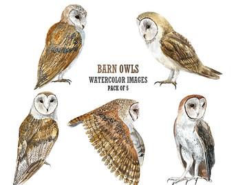 Barn Owl clipart 86 Owl Clipart Clipart 50