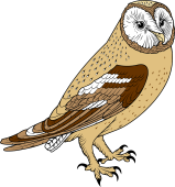 Barred Owl clipart 86 Barn Barn Owl Top