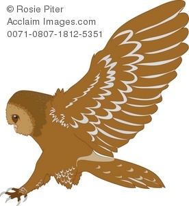 Bird Of Prey clipart swooping Illustration Clipart Clipart Owl Barn