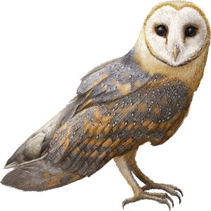 Barn Owl clipart Clip Owl graphics Owl graphics