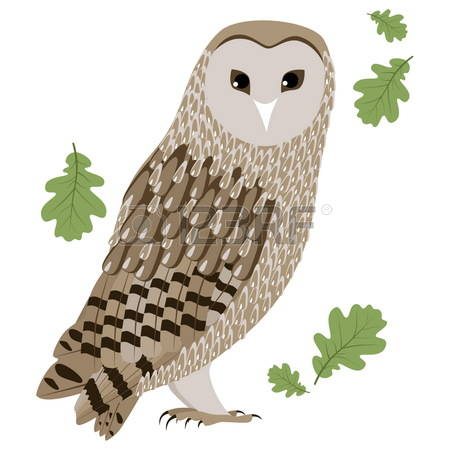 Barred Owl clipart carton Clipart drawings #14 Owl Owl