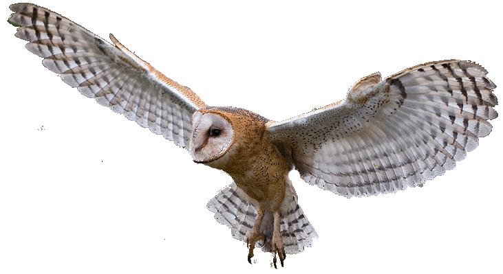 Barn Owl clipart 86 Owl Clipart Clipart 24