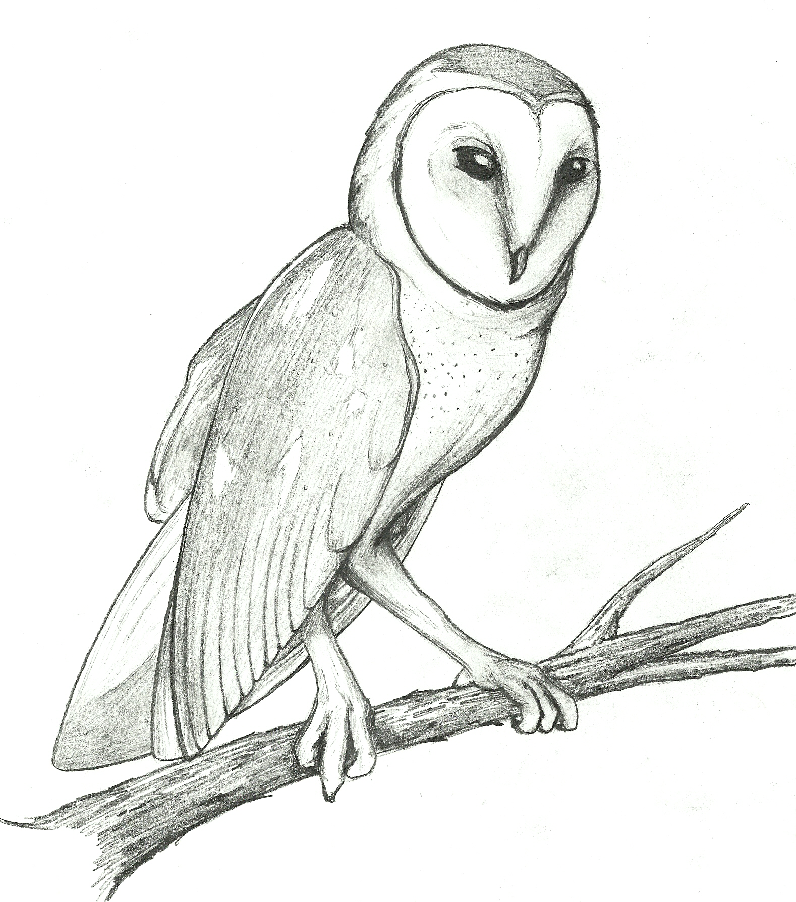 Barred Owl clipart black and white 83 Top Clipart Barn Owl