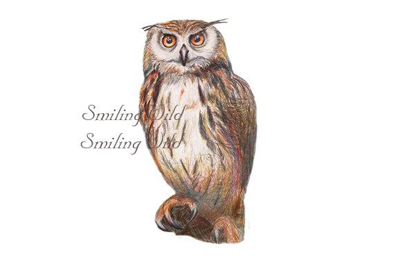 Bird Of Prey clipart barn owl Studio prey from Owl Birds