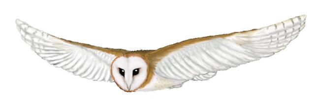 Barn Owl clipart catoon Flying Soul flying Celtic Craft
