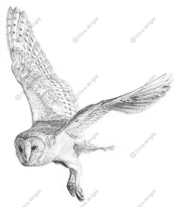 Drawn owl barn owl Flying is tattoo Description from