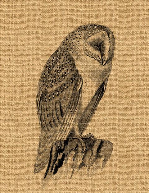 Barn Owl clipart labyrinth #7