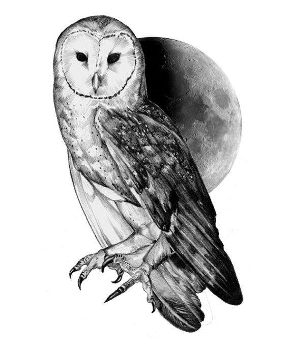 Barn Owl clipart labyrinth #9