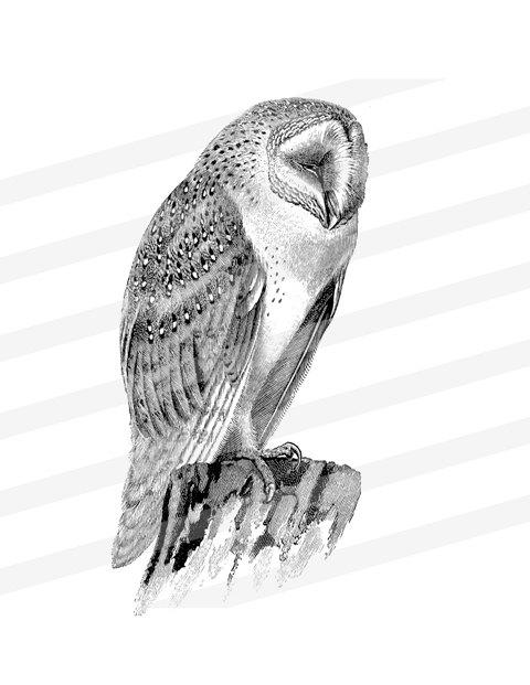 Barn Owl clipart labyrinth #3