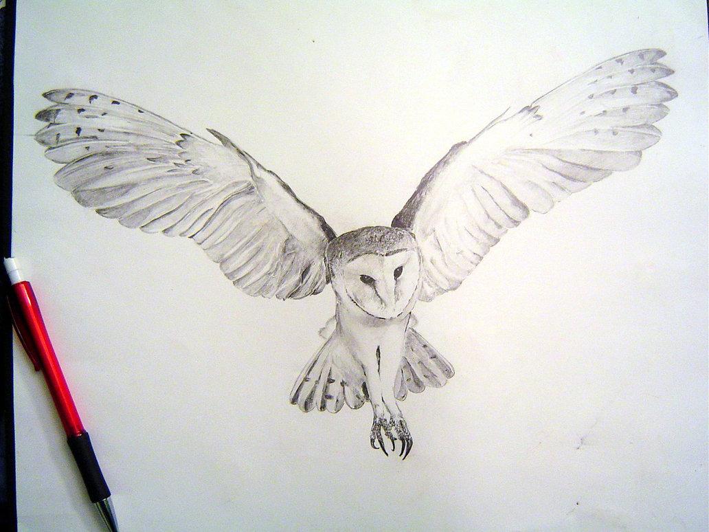 Barn Owl clipart labyrinth #12
