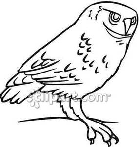 Barred Owl clipart black and white 86 Top Clipart Barn Owl