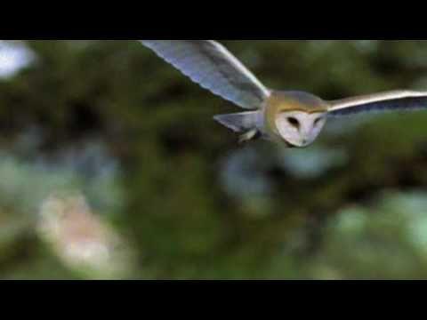 Barn Owl clipart nocturnal animal Go Pinterest 25+ on Barn