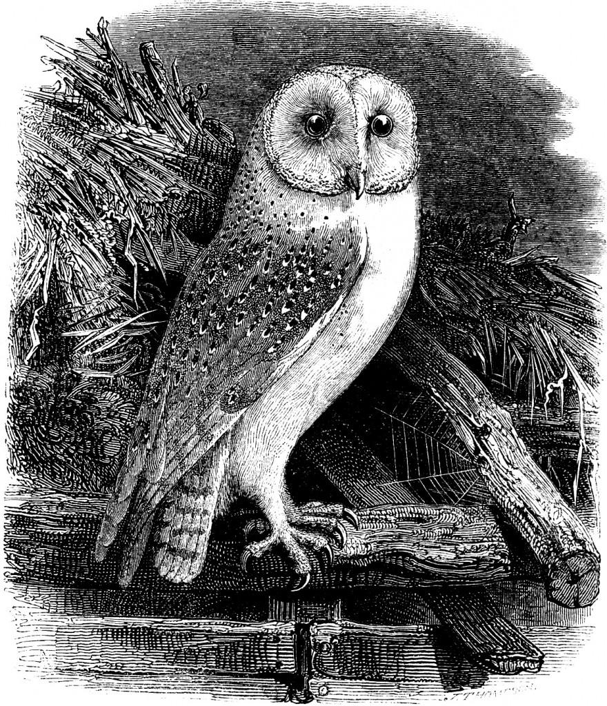 Bird Of Prey clipart barn owl Vintage Owl Clip Art Nifty