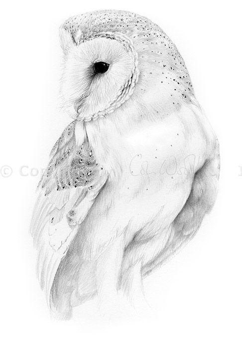 Drawn owl barn owl Barn Barn pencil ideas Geometric