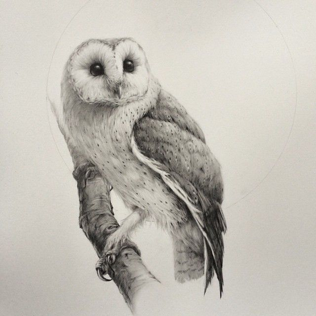 Brown Hawk Owl clipart pencil drawing Artist ideas { stunning absolutely