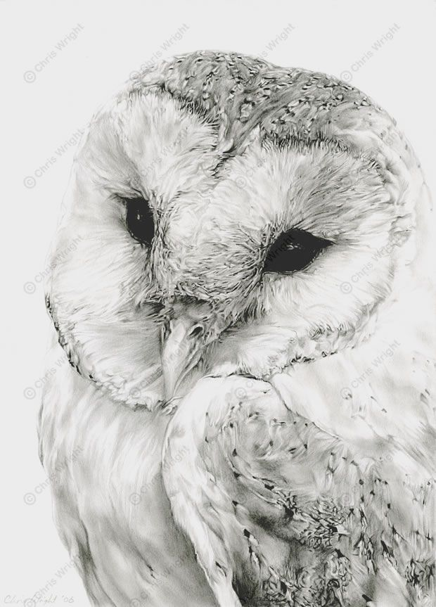Drawn owl couple Images Pencil This Pinterest Art