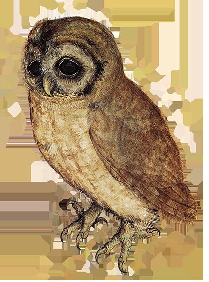 Brown Hawk Owl clipart transparent background Little Art sweet owl Clip