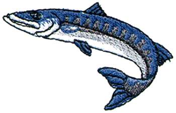Barracuda clipart Free 350x226 Barracuda Savoronmorehead Images