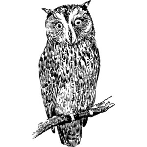Barred Owl clipart Here for Owl Clipart be