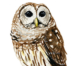 Barred Owl clipart Sizes art Etsy 5x7 Barred