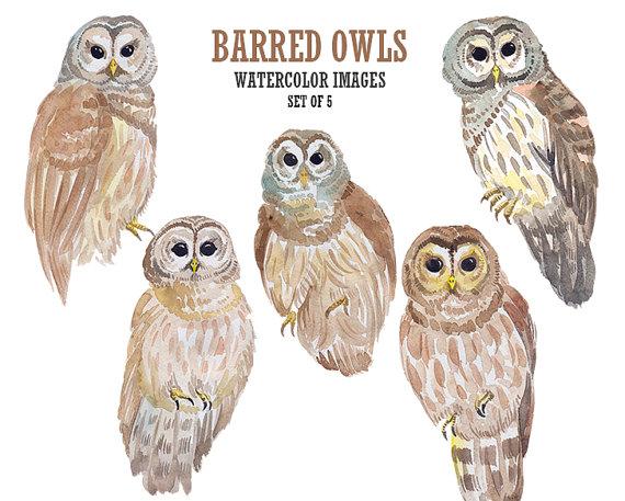 Barred Owl clipart bird prey  digital clipart illustration art