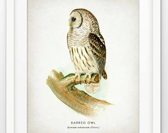 Barred Owl clipart bird prey Barred Etsy Barred Owl owl