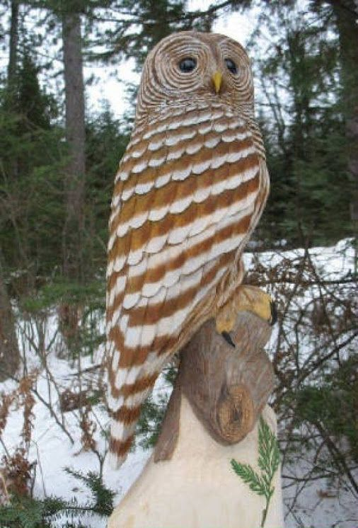 Barred Owl clipart bird prey Not Real or best 665