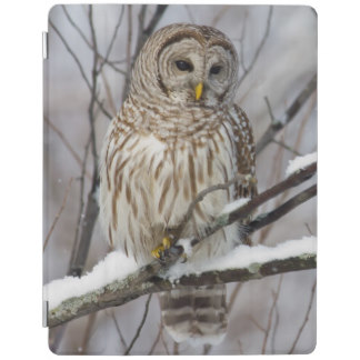 Barred Owl clipart smart Zazzle Cover Hooters Gifts Barred
