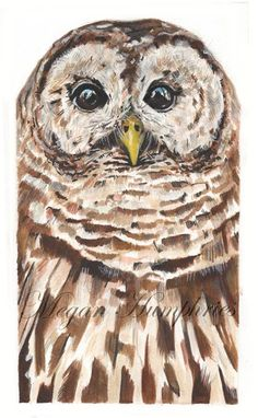 Barred Owl clipart smart Painting Owl Barred Owl Owls