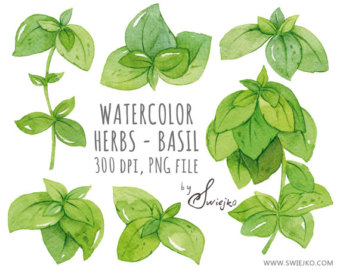 Basil clipart cartoon Art Etsy Leaves Clipart Watercolor