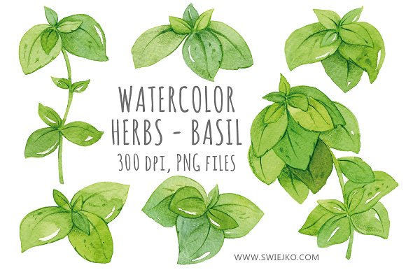 Herbs clipart teapot Illustrations Creative Illustrations Watercolor on