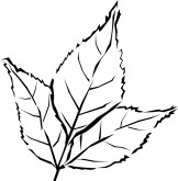 Basil clipart black and white Clipart black leaf and Leaf